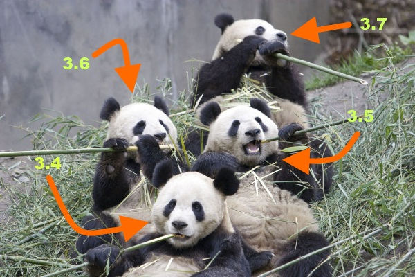Google Panda: A How To Guide